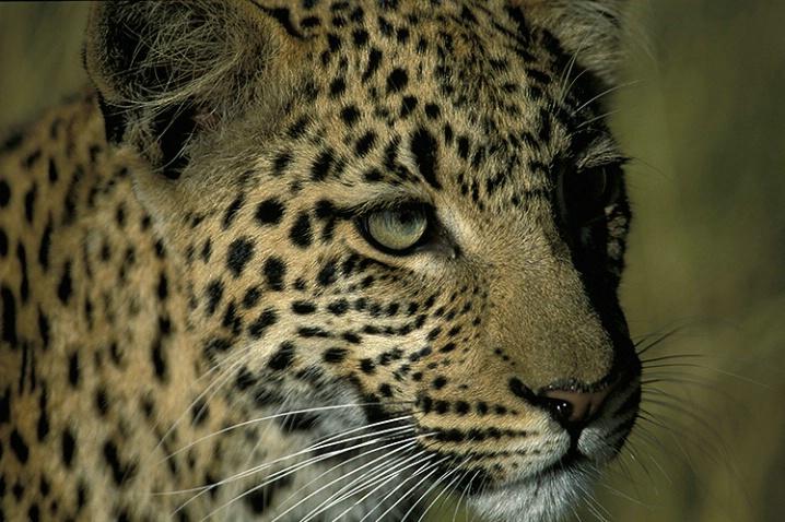 Stalker - ID: 1376001 © Averie C. Giles