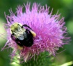 Pollen Legs