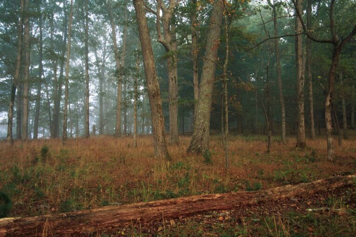 Morning Forest, Great Smokey Mountains N.P. - ID: 1387013 © Michael S. Couch