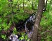 Creek in the spri...