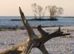 Driftwood at Cape...