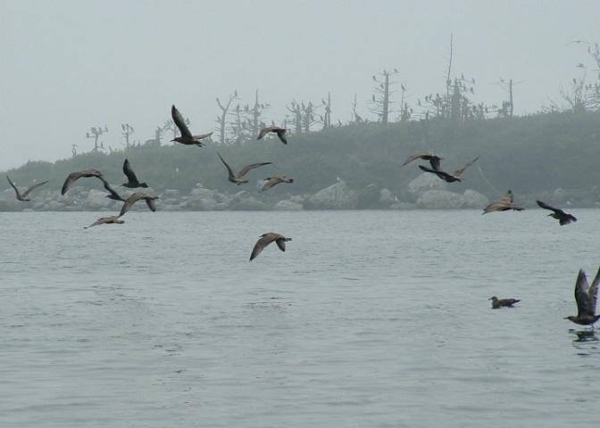 Gull Island Flyby