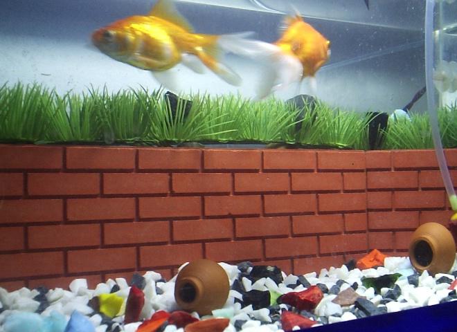 Glod Fishes