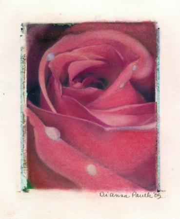 Haylie's Rose