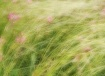 Wild grasses and ...
