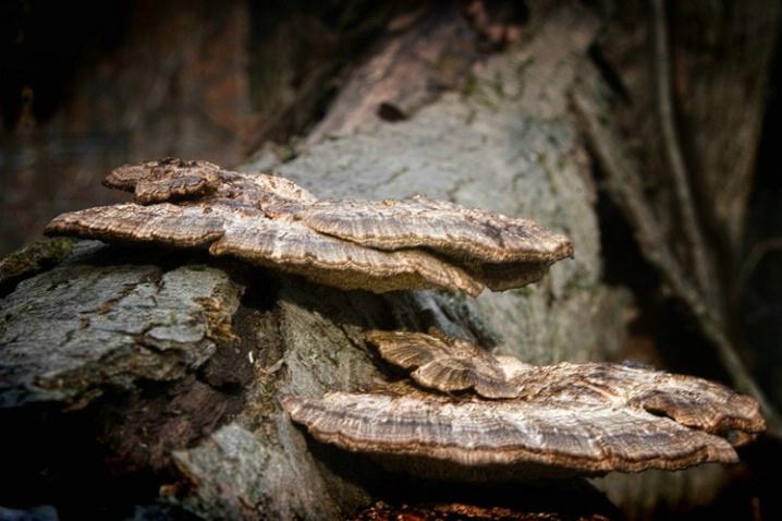 Forest Fungi - ID: 1428681 © Sandra Hardt