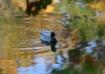 Duck # 10