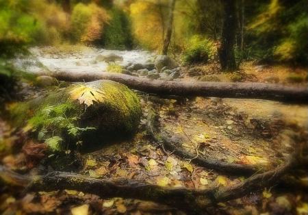 A Fairy Trail