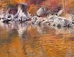Autumn Reflection...