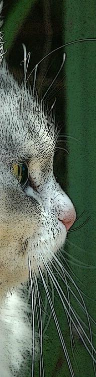 Pretty profile