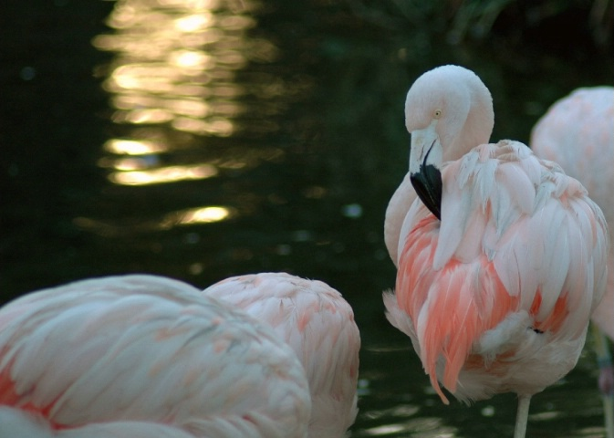 Birds of a Pink Feather