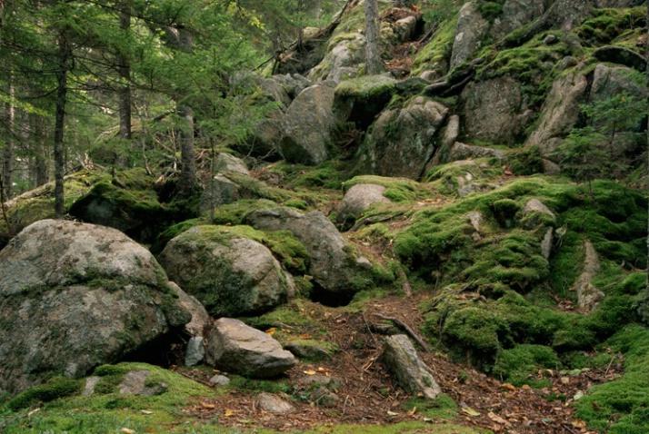 Mossy Rocks - ID: 1448784 © Nora Odendahl
