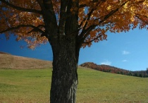 Fall in Boone - Before