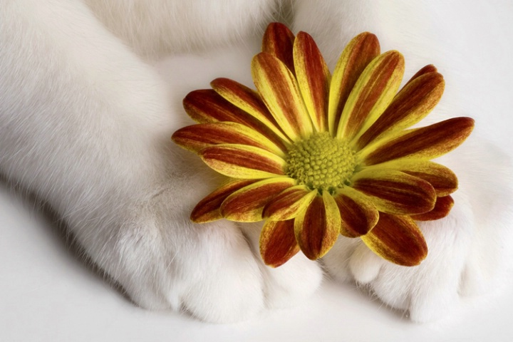 Petals and Paws
