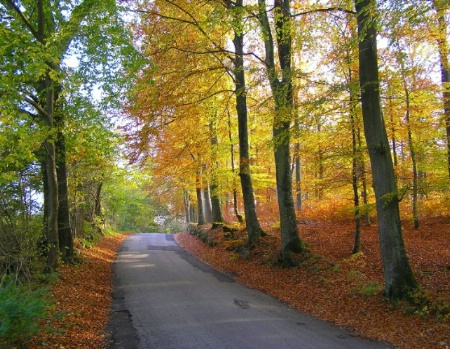 Forest road. Green, yellow and brown colours.