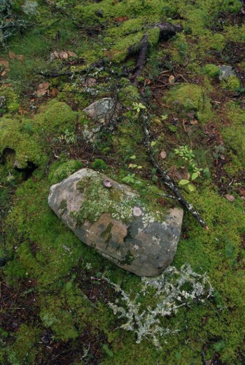 Moss, Root, Rock - ID: 1481474 © Nora Odendahl