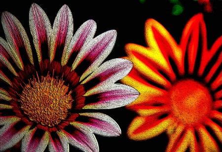 ...Painted Daisy...