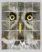 Alaska Zoo Owl