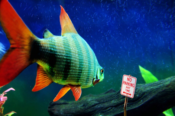 No Fish Parking Any Time