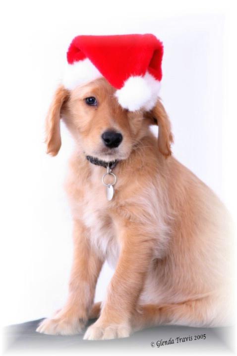 Moose's 1st Christmas