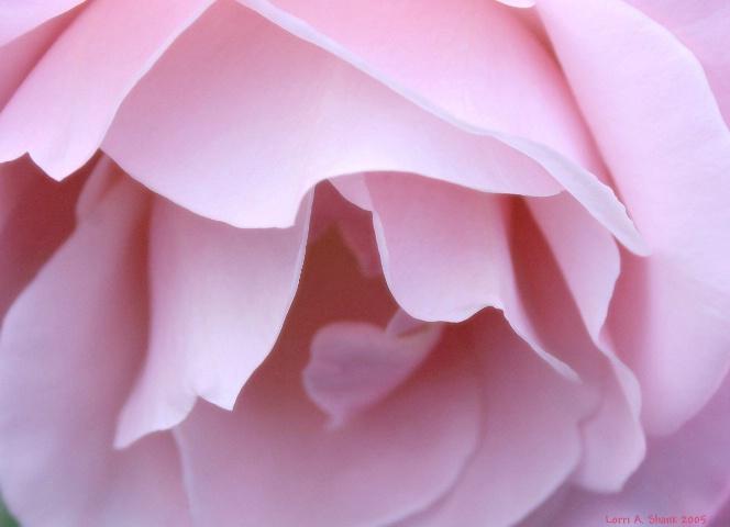 Pink Diffusion