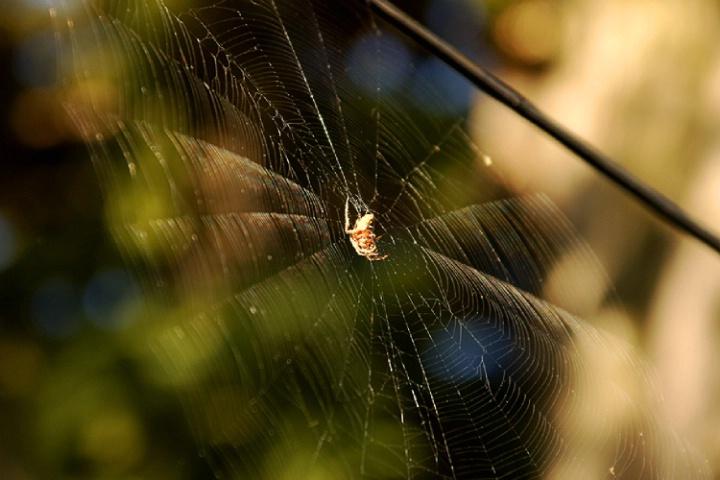The Web Master
