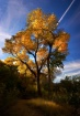 Fall Colors Zion ...