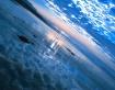 Earth's gravi...