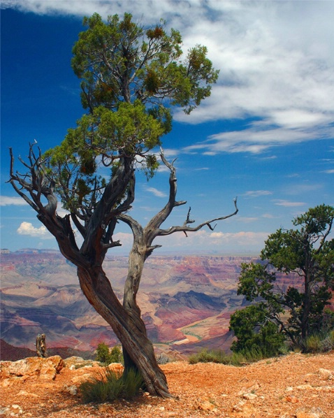 Grand Canyon National Park - Resubmit