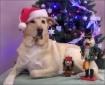 Santa Loves Dogs ...