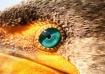 Eyes-03
