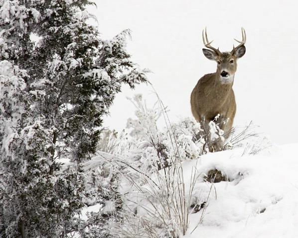 The Buck Stops Here - ID: 1564282 © Jim Kinnunen