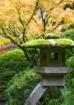 Japanese Lantern ...