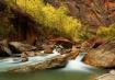 Zion - Fall Color...