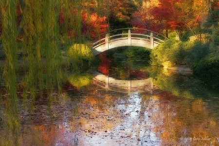 Silence Is Golden - Fort Worth Japanese Gardens