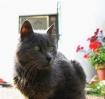 My beloved cat Ar...