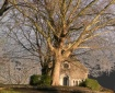 Great tree in Eng...