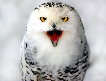 Angry snowball