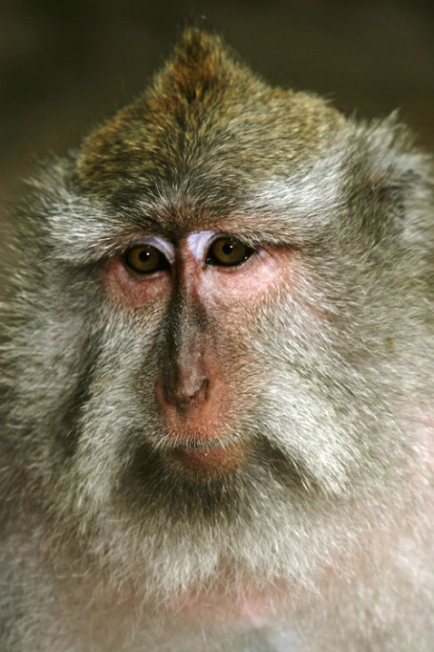 The Thinker: Monkey Forest