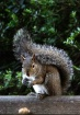 Hey Squirrel!