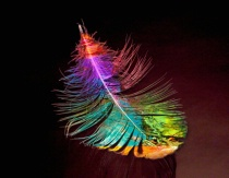 Glass Feather