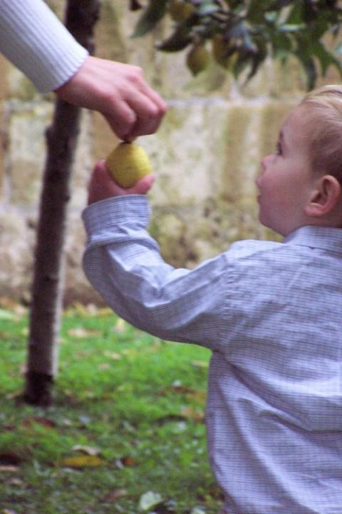 Carter's lemon
