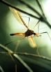 Flying Critter