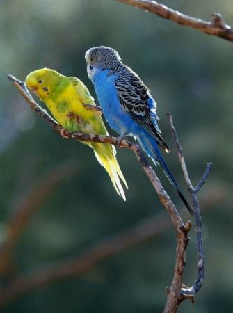 Bird Karate