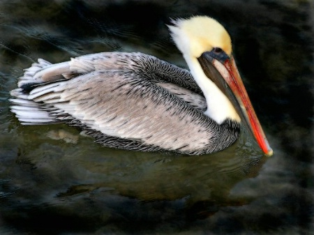 Pelican Paddle