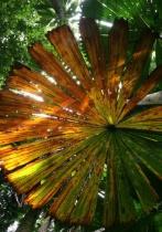 Umbrella fern