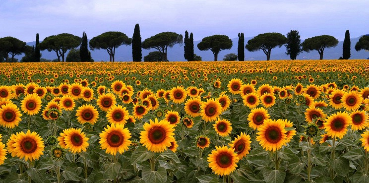 Tuscan Flowers - ID: 1628322 © Chip Coscia