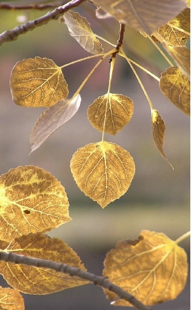 November's Gold