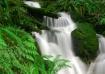 Mossy Rock Falls