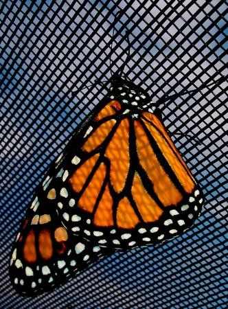 Patterns on a Butterfly